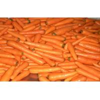 Contains Minerals Fresh Organic Carrot Washed And Polished , Anti-Oxidants, Anti-cancer