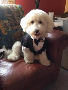 China Black puppy tuxedos / XXS XS Doggie Tuxedo Costume party outfits for boy on sale