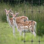 Пластичная ферма оленей ограждая сети