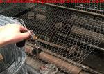 2 poultry netting/wire poultry fence/half inch mesh chicken wire/what is chicken wire/chicken wire celling/chicken wire