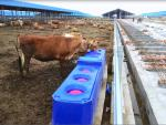 High quality pasture  4m Blue Thermo Six-Hole drinking Waterer  for animals  (with cover and balls) made of LLDPE