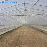 Tomato Naturally Ventilated Greenhouse
