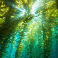China Seaweed Extract Organic NPK Foliar Fertilizer at Discount Rate/Alginate≥22-25%; on sale