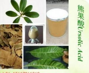 China Natural Rosemary Extract Ursolic acid 25% on sale