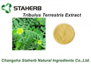 China 55056-80-9 Herbal Medicine for Big Penis Tribulus Terrestris Extract 40% ~ 90%Tribulus Saponins on sale
