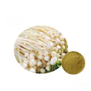 China Brown Yellow Fine Enoki Mushroom Extract Strengthen Immune System HPLC Test Method on sale