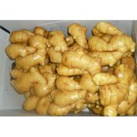Supply of fresh ginger