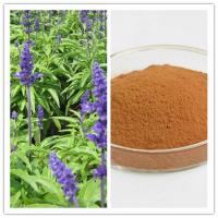 China Natural eliminate fat and help circulation 10: 1 Clary Sage / Salvia Officinalis Extract on sale