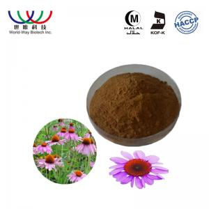 China Echinacea Purpurea Pure Plant Extract 2% - 4% Chicoric Acid Blance Blood Sugar on sale