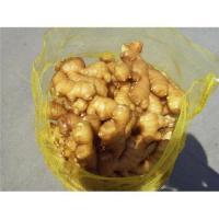 20kg mesh bag fresh ginger
