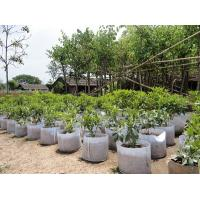 Fashionable Design  Plant Grow Bags 0.1 - 3.5mm Thickness Optional Color