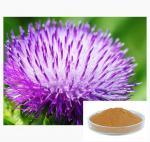 Milk Thistle / Silybum Marianum Extract Silymarin / Silibinin CAS 22888-70-6 for Liver Protection