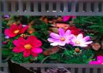 China Waterproof IP67 / IP65 P12.8mm 1R1G1B Outdoor LED Video Display Screen With 12bit wholesale