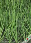 Abrasion Resistant Europe Soccer Artificial Grass / Soccer Synthetic Turf