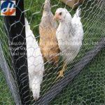 grillage de poulet pour la maison de poulet
