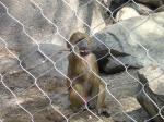 Malla del parque zoológico de la cuerda de alambre, malla tejida de la cuerda de alambre de acero, malla de la pajarera, malla inoxidable de la torsión