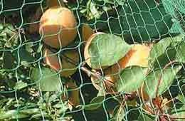 China Fruit Protection Net on sale