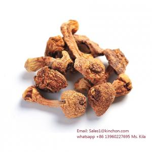 China Dried Agaricus, agaricus blazei, Himenmatsut, almond mushroom on sale