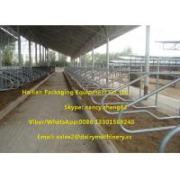 China Single Row Type Milking Cow Free Stall , 3mm Thickness Hot Galvanizing Tube on sale