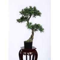 80cm Artificial Bonsai Tree Refreshing , Indoor Bonsai Plants Gorgeous Everlasting