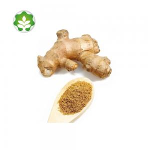 China dried ginger root extract powder without side effects on sale