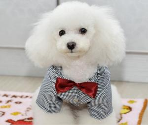 Customized Decent Pet Wedding Suit , Dog Formal Wear with Red Bow ...