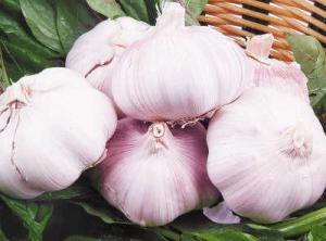 China 2017 new   garlic    El ajo  from jinxiang  china on sale