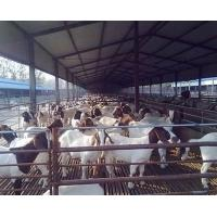 Anti Corrosive Agricultural Steel Frame Buildings Galvanized Steel Cowshed Easy Installation