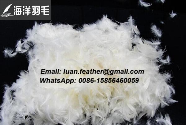 2-4cm white goose feather