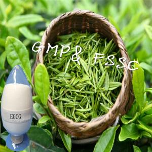 China GMP Manufacture Green Tea Extract EGCG With CAS No. 985-51-5 on sale