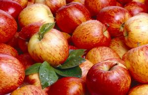 China Pome Fruit , Fresh Red Organic Fuji Apple 7cm With Sugars , Vitamin C on sale