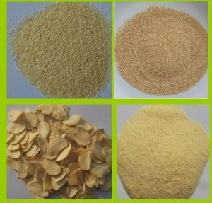 China DEHYDRATED GARLIC GRANULES 8-16MESH on sale