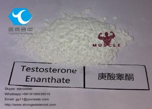 China Raw Testosterone Powder Testosterone Enanthate 99% Purity CAS: 315-37-7 for Muscle Building on sale