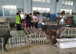 Aluminium Alloy Conveyor Belt Vulcanizing Machine With Automated Control Boxes