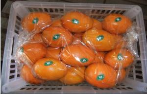 China Chinese Natural Organic Citrus Fresh Navel Orange Contains Vit. C For Old People, the greater of 750 grams or more on sale