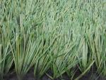 China Professional Football Artificial Grass With Thiolon Yarn For Professional Football Pitches wholesale