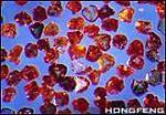 порошок микрона диаманта