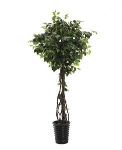 China 220cm Height PU Stem Ficus Tree on sale