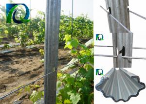 China 7FT Height Metal Plant Support Stakes , Hot Dip Galvanised Steel Vineyard Posts on sale