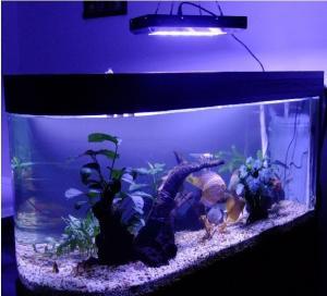 China 90w led submersible aquarium light 85-285v on sale