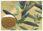 80 Mesh Natural Olive Leaf Extract Powder Food Grade Improving Immune System