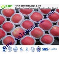 Wholesale : Top Quality Chinese Fresh Apple / Fresh Apple Bulk / Red Fuji Apple Price