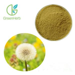 China Taraxacum Officinale Wigg Herbal Plant Extract Dandelion Root Extract 4% Favonoids supplier