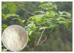 Plant leaf extract powder , anti-alcohol Ampelopsis grossedentata Extract powder dietary supplement