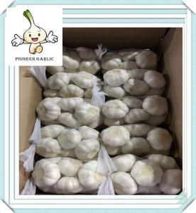 China New Crop Garlic Fresh Garlic For Wholesale Grade A quality fresh garlic on sale