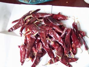 China Yidu red chilli on sale
