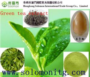China Top quality 98% bio green tea extract with free samples & highest quality on sale