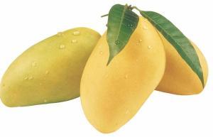 China eliquid flavor, mango flavor,flavor concentrate on sale