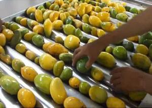 China Advanced Dried Mango Processing Machine / Commercial Mango Drying Machine on sale