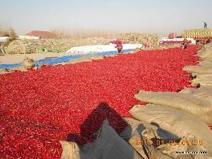 China Birds Eye Chillie Pepper on sale